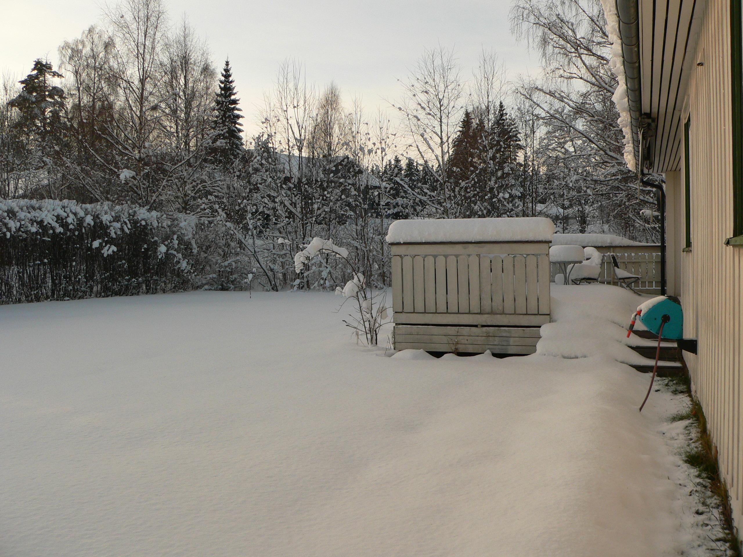 Jardin, le 7 décembre 2008